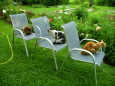 3 Katzen auf 3 Stühlen