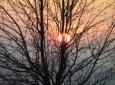Baum in untergehenden Sonne am Sonntagberg / Zum Vergrößern auf das Bild klicken