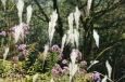 Blühende Ziergräser / Zum Vergrößern auf das Bild klicken