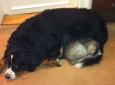Elfriede Hersche / Calvin und schwarze Katze / Zum Vergrößern auf das Bild klicken