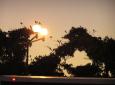 Vögel am Abend in Cancun (Mexico) / Zum Vergrößern auf das Bild klicken