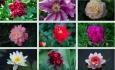 Blumen / Zum Vergrößern auf das Bild klicken