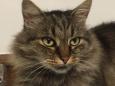 Bruno Hersche / Dunkle Katze / Zum Vergrößern auf das Bild klicken