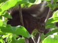 Bruno Hersche / Eichhörnchen im Magnolienbaum / Zum Vergrößern auf das Bild klicken