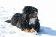 Gino im Schnee / Zum Vergrößern auf das Bild klicken