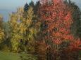 Bruno Hersche / Herbstfarben an Bäumen Reisenberg / Zum Vergrößern auf das Bild klicken
