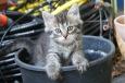 Bruno Hersche / Junge Katzen am gedeckten Balkon / Zum Vergrößern auf das Bild klicken