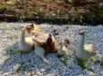 Bruno Hersche / Katzenmutter bei den Enten / Zum Vergrößern auf das Bild klicken