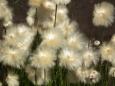 Bruno Hersche / Am Lago di Naret - Blume / Zum Vergrößern auf das Bild klicken
