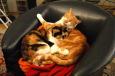 Rote Katze und Katzenmutter im Fauteuil / Zum Vergrößern auf das Bild klicken