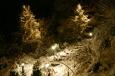 Weihnachtsbaume Reisenberg im Schnee bei Nacht / Zum Vergrößern auf das Bild klicken