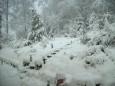 Winter zu Frühlingsbeginn 2007 / Zum Vergrößern auf das Bild klicken