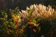 Magnolie und Ziergrasstrauch im Gegenlicht / Zum Vergrößern auf das Bild klicken