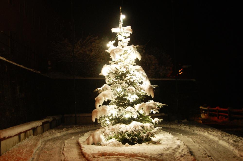 weihnachtsbaum_basilika_201210_09_zugeschn_gr100